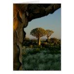 Bosque del árbol del estremecimiento, tarjeta en b