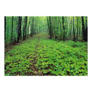 Bosque del arce, parque de Gatineau, Quebec, Canad Comunicados Personales