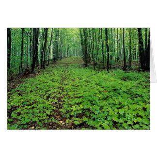 Bosque del arce, parque de Gatineau, Quebec, Canad Felicitación