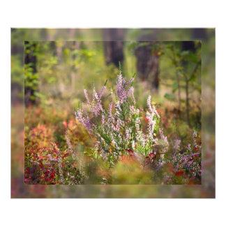 Bosque del brezo fotografias