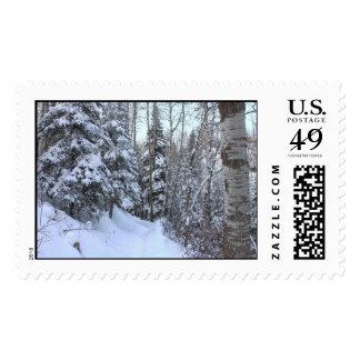 Bosque del canadiense Nevado Sellos