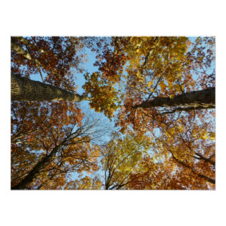 Bosque del color de la caída póster