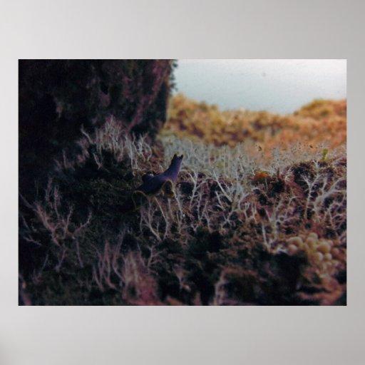 Bosque del coral de la barra de mar impresiones