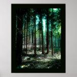 Bosque del encanto poster
