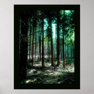 Bosque del encanto póster
