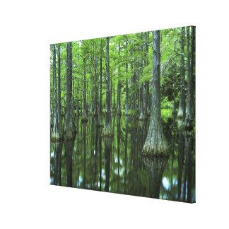 Bosque del Estado de los E.E.U.U., la Florida, Apa Impresión En Lienzo Estirada