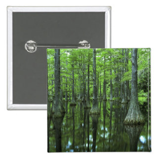Bosque del Estado de los E.E.U.U., la Florida, Apa Pins