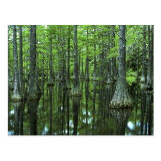 Bosque del Estado de los E E U U la Florida Apa Postal