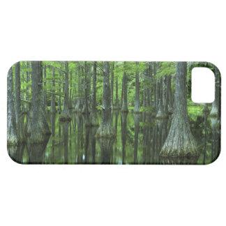 Bosque del Estado de los E.E.U.U., la Florida, iPhone 5 Fundas