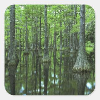 Bosque del Estado de los E.E.U.U., la Florida, Pegatina Cuadrada