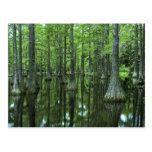 Bosque del Estado de los E.E.U.U., la Florida, Tarjeta Postal