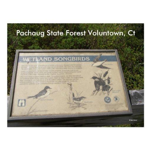 Bosque del estado de Pachaug… Postal