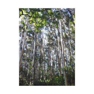 Bosque del eucalipto impresión de lienzo