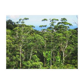 Bosque del eucalipto lienzo envuelto para galerías