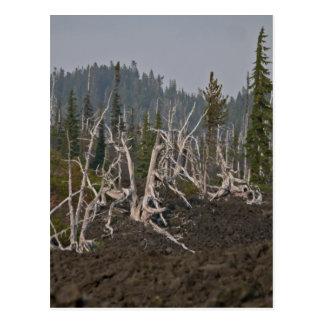 Bosque del fantasma en la lava, viejo McKenzie Hwy Tarjeta Postal