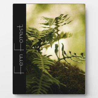 Bosque del helecho placas con foto