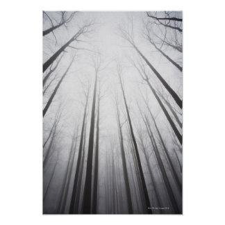 Bosque del invierno en la niebla, New Jersey Póster