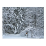 Bosque del invierno postal