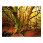 Bosque del otoño comunicado personalizado