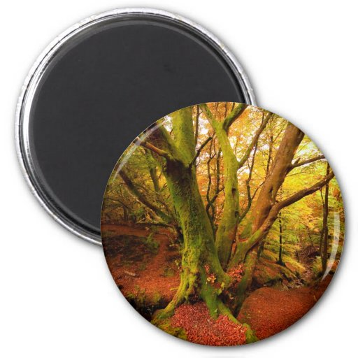 Bosque del otoño imán de nevera
