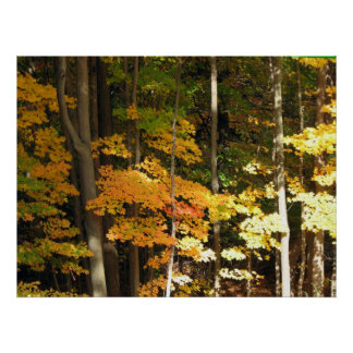 Bosque del otoño póster