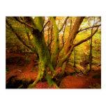 Bosque del otoño tarjetas postales