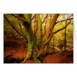 Bosque del otoño tarjeton