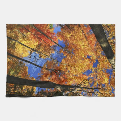 Bosque del otoño toallas