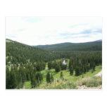 Bosque del pino en Colorado Tarjetas Postales