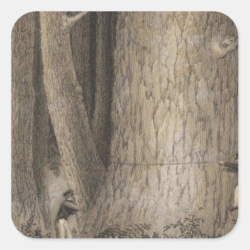 Bosque del pino, Oregon Pegatina Cuadrada