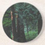 Bosque del terciopelo posavasos personalizados