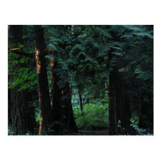 Bosque del terciopelo tarjetas postales