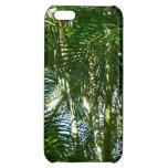 Bosque del verde tropical de las palmeras