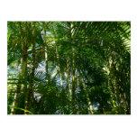 Bosque del verde tropical de las palmeras postal