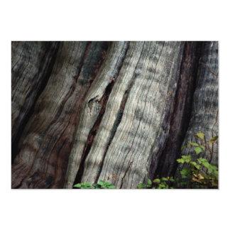 Bosque del viejo crecimiento, Columbia Británica, Comunicado Personalizado