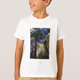 bosque del Viejo-crecimiento Playera
