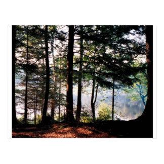 Bosque del vitral tarjetas postales