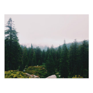 Bosque denso de árboles cónicos postales