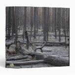 Bosque después del fuego en el parque nacional de