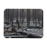 Bosque después del fuego en el parque nacional de  iman flexible