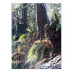 """bosque """"duende"""" en la nieve #2 postales"""