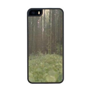 Bosque e hierba