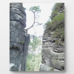 Bosque en Alemania Placas
