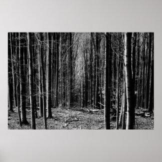 Bosque en blanco y negro póster