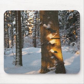 Bosque en el invierno alfombrillas de raton