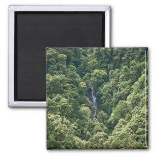 Bosque en el valle de Mangdue, Bhután de Himalaya Imán Cuadrado