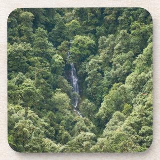 Bosque en el valle de Mangdue, Bhután de Himalaya Posavasos De Bebidas