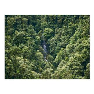 Bosque en el valle de Mangdue, Bhután de Himalaya Postal