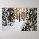 Bosque en invierno impresiones