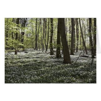 Bosque en la primavera 2 felicitacion